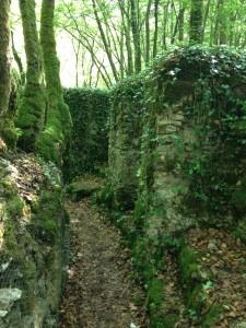 trail 13